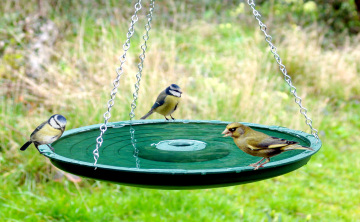 Birdcare in your Garden